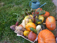 légumes de notre jardin potager