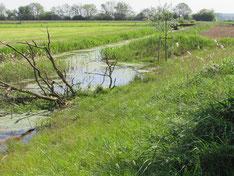 Flussbau und Gewässerrenaturierung