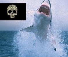 10 animales más peligrosos del mundo invertirenfamilia.com