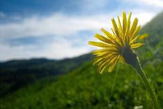 flowersbyzia