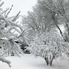 Schlafen im Winter – Büsche und Bäume mit Schnee