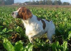 Breton à l'arrêt dans la plaine champenoise