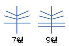 #17 思い込んでいた花弁の模式図