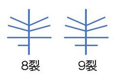 #18 実際の花で確かめた花弁の模式図