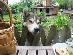 Ob für mich wohl auch etwas abfällt, fragt Zeus über den Zaun