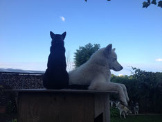 Sitzt Blizzard da tatsächlich mit einer Katze zusammen auf dem Hüttendach?? - Nein, es ist die junge Kumpelin Arizona