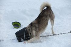 Ich bin Yukon, für die, die mich nicht erkennen sollten. Und ich übernehme nach dem Fressen meist den Abwasch...