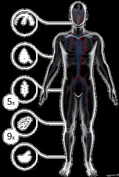 Wichtige Bestandteile für Funktionsweise des Körpers