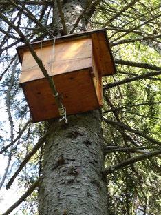 德米特里高掛在樹上的蜂箱