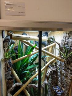 Phelsuma guimbeaui Terrarium