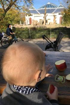 Unser Baby-led Weaning Blog - Zwischenbilanz Woche 30