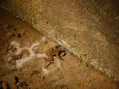 Frosch im Besucherbergwerk