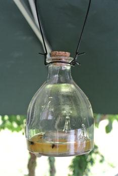 Wespenfalle kaufen
