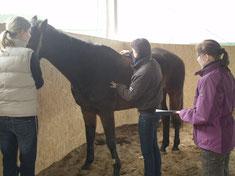 praktische Ausbildung am Pferd