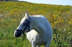 unsere Rosi auch mit 24 noch ein Bildschönes Pony