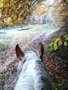 Herbstausritt in die Granitz