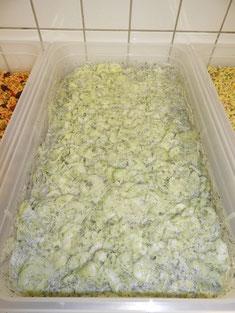Gurkensalat mit weißen Zwiebeln, Dillspitzen und Creme Fraiche Dressing