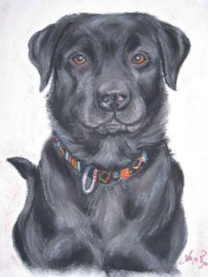 Labrador Pastellkreide