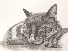 Katze Bleistift 2014