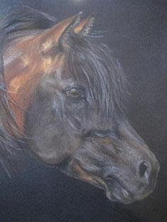 Morgan horse Pastellkreide