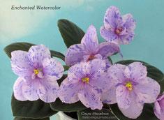 Enchanted Watercolor
