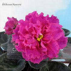 ЕК-Богиня Красоты