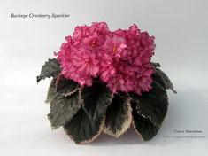 Buckeye Cranberry Sparkler