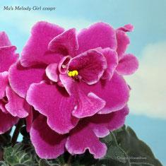 Ma's Melody Girl спорт