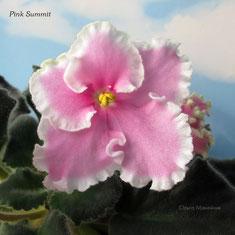 Pink Summit
