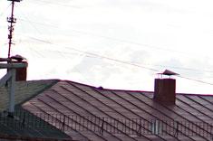 Контуры в красном. Кроп 100% из центра кадра