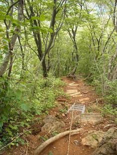 最後の坂田峠への下りは、とても急斜面です。