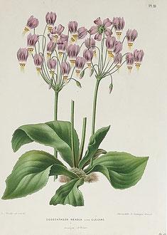 Set of 6 botanical prints 1879