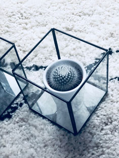 cube en verre, glassbox, cactus, déco, decoration, bougeoir, photophore, scandinave