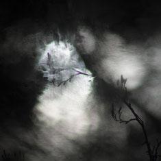 photography Forêt de Soignes photo enfants noyés