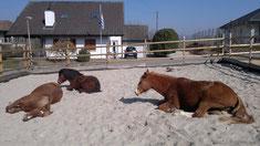 Amico cavalli