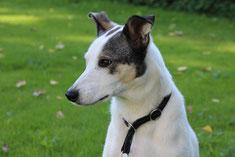 Bild: Joey aus der Smeura Rumänien, Tierhilfe Hoffnung, Tierheim Bielefeld