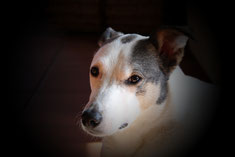Bild: Joey schaut melancholisch; Smeura Rumänien, Tierhilfe Hoffnung, Tierheim Bielefeld