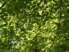 新緑が美し~い!