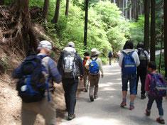 涼しげな木立の中を歩きます