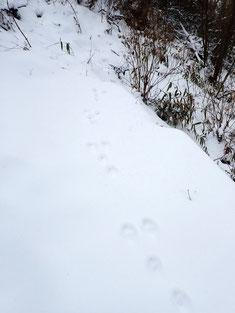 足跡はたくさん残っていた