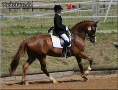 TOTAL KISS, Hengst, KWPN, 4 Jahre