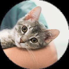 Tierkrankenversicherung und OP Versicherung Katze günstig online abschließen