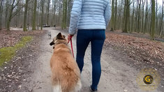 Happy-Go-Lucky Dog - Comportementaliste Canin Bruxelles
