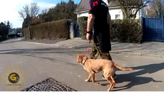Happy-Go-Lucky Dog - Dog training Brabant Flamand