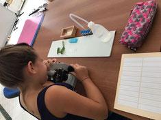 Vindobona Montessori Privatschule Rhythmus