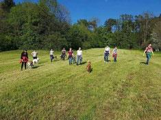 Mehrere Menschen laufen mit ihren Hunden ohne Leine über eine Wiese