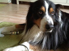 PowerTube Hund Pfote-Pfote Behandlung