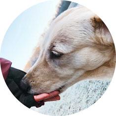 Leckerlies beim Hundetraining füttern oder den Hund anders belohnen