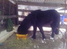 #HairtakbeiPferden  #Pferdemagengeschwüre #Pferdeverdauungsprobleme #Hariakibeihunden  #HaritakibeiTieren  #haritakikaufenfürtiere #hilfebeimagengeschwüren #Haritakianwendunghunde