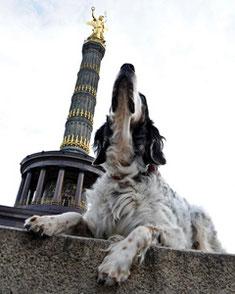 Hauptstadthunde, Preise